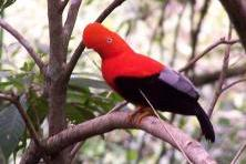Visite du parc du Manu en 5 jours