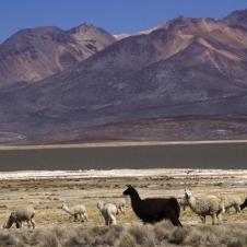 Lagunas de Salinas - Arequipa