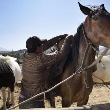 Balade à cheval  à Arequipa