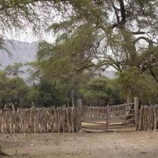 Forêt de Pomac  à Chiclayo