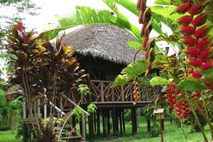 Discovering the Amazone in Lodge